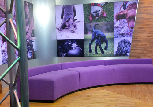 eye catching design set design - Crufts